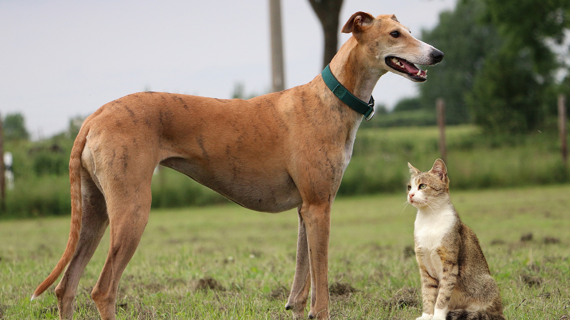 Tierärzteverlag Bei Hund Und Katze